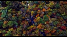 Drone over beautiful forest landscape. Forest Landscape, Beach Landscape, Best Christmas Music, Learn Piano Beginner, Royalty Free Video, Forest Background, Free Stock Video, Nature Gif, Relax