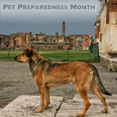 This month is National Pet Preparedness Month. In order to be sure your pet is prepared for a disaster, make sure your safety kit includes food, water, leash and collar, bowls, pet ID, medications, immunization records, pet carrier, first aid kit, and the number and address of Animal Emergency Center of Tulsa.