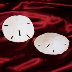 totally gonna have sand dollars for wedding favors. this website is crazy.