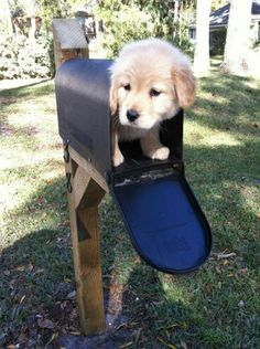 .puppy in a mail box