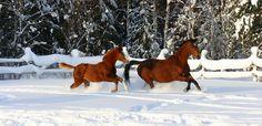 Warmblood Horses, Moose Art, Animals, Animales, Animaux, Animal, Animais