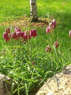 Bulb Flowers, Plants, Plant, Planets
