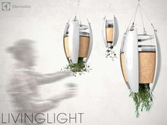 """Living Self-Powered Lamps are really """"green"""" in every sense of the word. Perfect for someone who likes to use fresh herbs in their cooking."""