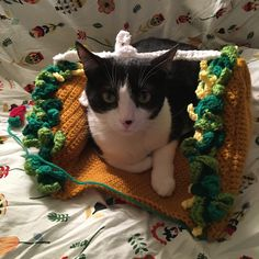 Made this fun #taco bed for a sweet #cat! Available in my shop!