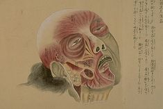 Rendezvous With Anus: Japanese Anatomy Scrolls From The 1800s