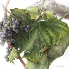 Residential Botanical Painting Holiday in Umbria Italy | Elaine Searle