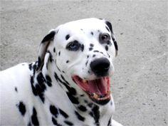 My dog Chance. Dorothy, Valley Stream, NY - 8/5/2015
