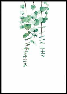 HANGING EUCALYPTUS PLANT POSTER