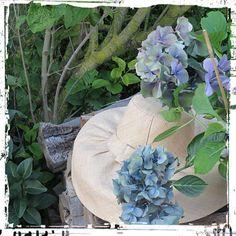 """Hortensia """"Reinate Steiniger"""" #flower"""