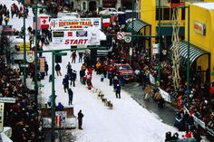 Alaska Image - Iditarod Sled Dog Race, Anchorage - Lonely Planet