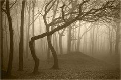 """Foresta Hoia Baciu, Romania: è conosciuta come il """"Triangolo delle Bermuda"""" della Romania per le storie e le legende di improvvise sparizioni, avvistamenti di Ufo e dispositivi elettronici che smettono di funzionare"""
