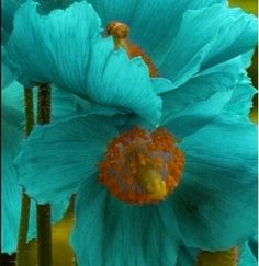Poppy of 2 august birth flowers id like this as a tattoo poppy of 2 august birth flowers id like this as a tattoo pinteres mightylinksfo Gallery