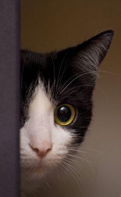 #cat #cute #felines4us