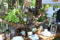 Driftwood with Succulents, Mini Orchids and Greenery