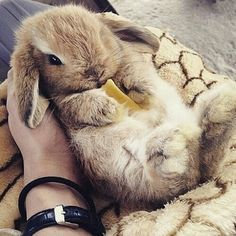 Little bunny rabbit Cute Baby Bunnies, Funny Bunnies, Cute Funny Animals, Cute Baby Animals, Animals And Pets, Cute Babies, Tiny Bunny, Wild Animals, Fluffy Bunny