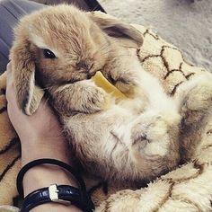 Image via We Heart It #animal #aww #brown #bunny