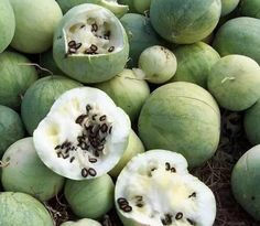 黑瓜子是這裡來的    其實打瓜確實是西瓜的一個品種,不過打瓜的果實比一般西瓜小,子很多而且大.栽培這種瓜主就是為了收瓜子。這種瓜,吃的時候,用拳頭一打就開了,所以叫打瓜。