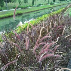 Singapore punggol waterway park