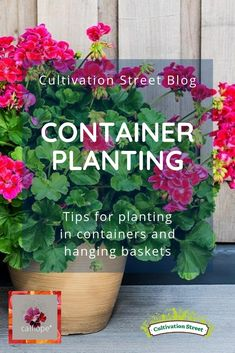 Planting containers and hanging baskets - Cultivation Street Container Plants, Container Gardening, Gardening Tips, Hanging Baskets, Planting, Street, Potted Plants, Flowers, Blog