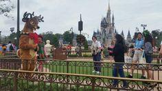 Reindeer  #frangipanifamilyChristmas2015 #disney #waltdisney #wdw #magickingdom #cinderellascastle #reindeer