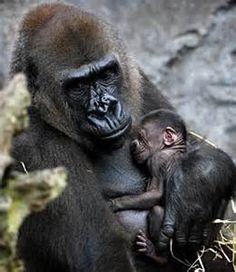 animal mothers and babies - Yahoo Image Search Results
