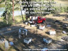 Pallets of 4 hives each are placed in circles of with the place open to allow ease of access. Bee Skep, Pallets, Bees, Circles, How To Become, Honey, Group, Board, Fun