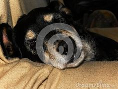 A close-up view of a sleepy old family dog peaking with one eye open. Family Dogs, Guinea Pigs, Sheep, Goats, Cute Animals, Horses, Eye, Pretty Animals, Cutest Animals