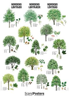 Nordens Løvtræer Plakat