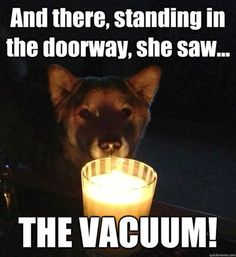 Ghost stories for dogs... LOL