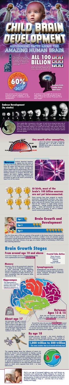these images show Child Brain Development. They pertain to child development because it explains the stages that brain is in during fetal stages all the way up to 10 years old Human Growth And Development, Baby Development, Personal Development, Brain Based Learning, Developmental Psychology, Childhood Education, Teaching, Amazing Facts, Interesting Facts