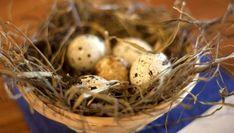 #Ostern mal besonders? #Wachteleier aus regionaler Erzeugung in der Säumerhof Bio-Genusswelt in Grafenau.