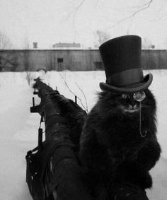 "Why not. * * "" CUZ A MONOCLE AND A TOP HAT IS FUR HUMANS. DIS IMAGE DESECRATES MEH HUNTIN' ABILITIES."""