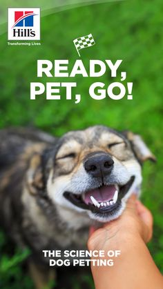 It seems like a dog's head and a person's hand were meant to go together. But, why do dogs like to be petted so much, and what are the best places to pet a dog? To answer these questions, it's important to understand the signs dogs give before, during and after petting. Get ready — we are about to explore the science behind dog petting. Dachshund Puppies, Mini Puppies, Pet Dogs, Small Puppies, Dogs And Puppies, Pug, Animals And Pets, Baby Animals, Funny Animals