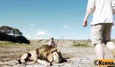 A cada ano os caçadores ganham troféus para matar milhares de animais selvagens exóticos em África, isso combinado com a caça ilegal representa uma grave ameaça para a sobrevivência de nossas espécies ameaçadas de extinção. Temos que parar com isso agora. Os animais também são criados em cativeiro com o único propósito de ser caçados pelos turistas que estão dispostos a pagar o preço elevado, uma caça ao leão pode custar um caçador de troféus até US $ 35.000,00.Precisamos aumentar a…