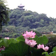 sankeienはす.jpg Another reason to go Sankeien Garden again.