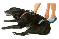 Harnesses to let you easily help dogs stand up