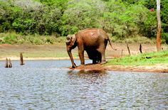 best wildlife hotspots closer to home