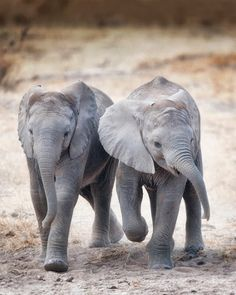 Baby elephants need their moms - End The Ivory Trade & Save The Elephant