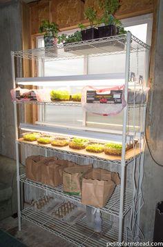Build an Easy DIY Grow Light for Seedlings | Petite Farmstead