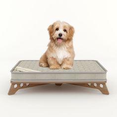 Caminha para Cães e Gatos PetSlim - Minimall - Pet Amour