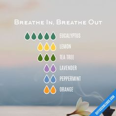 Essential Oil Uses Breathe In, Breathe Out — Essential Oil Diffuser Blend Drapery Buying Tips Draper Essential Oils For Breathing, Plant Therapy Essential Oils, Essential Oils Guide, Essential Oil Scents, Essential Oil Diffuser Blends, Essential Oil Uses, Doterra Essential Oils, Breathe Essential Oil, Essential Oil Combinations