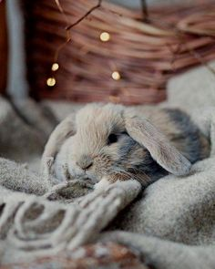 If you are searching for a furry friend that is not only extremely cute, but easy to have, then look no further than a pet rabbit. Cute Baby Bunnies, Cute Baby Animals, Animals And Pets, Funny Animals, Beautiful Creatures, Animals Beautiful, Fluffy Bunny, Animal Photography, Cake Photography
