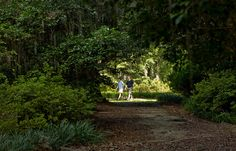 ALFRED B. MACLAY GARDENS STATE PARK.