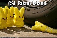 The next in the continuing CSI saga.