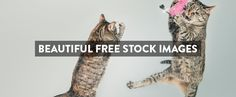 22 Awesome Websites with Stunning Free Stock Images