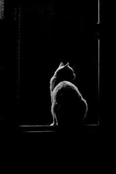 silhouette cat Katze in schwarz/weiß #cat #monochrome