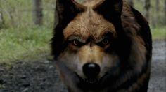 TV show wolf blood