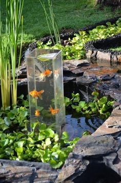 Floating fish koi pond observatory lets you view your fish for Cascada estanque prefabricado