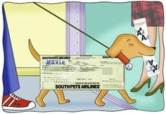 Tips for pets on a plane: Making the skies friendly for traveling animals