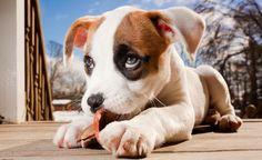 tilestwra.com | 66 κουτάβια που μπορούν να λιώσουν και τις πιο σκληρές καρδιές